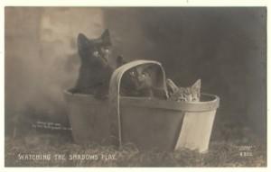 Rotograph Cat Real Photo Postcard