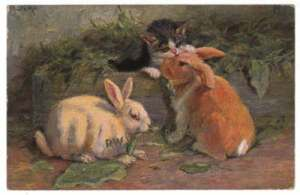 1908 M. Stocks Rabbit Postcard